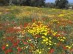 flora-north-cyprus2