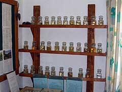 Alevkaya Herbarium