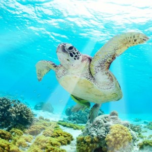 North Cyprus Turtle