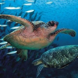 Kyrenia Turtles